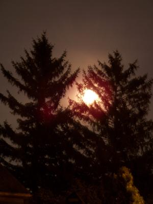 Moonrise in the Pines